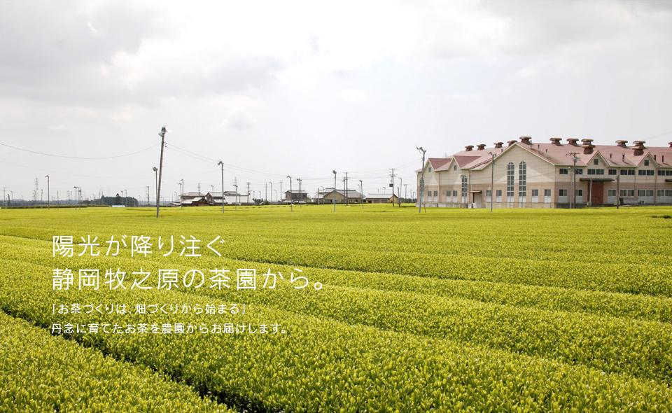 陽光が降り注ぐ静岡牧之原の茶園から。丹念に育てたお茶を農園からお届けします。